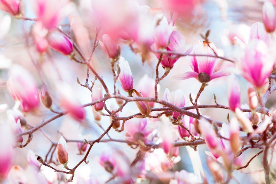 spring-blossom-PKLQWXP_960.jpg