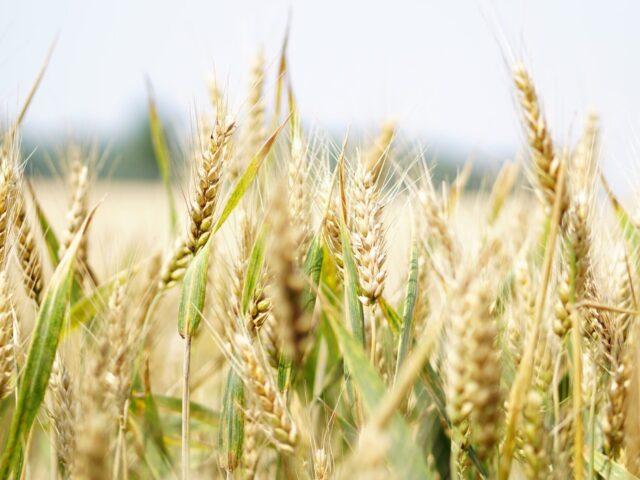 """agricoltura virtuosa """"glifosato free"""""""
